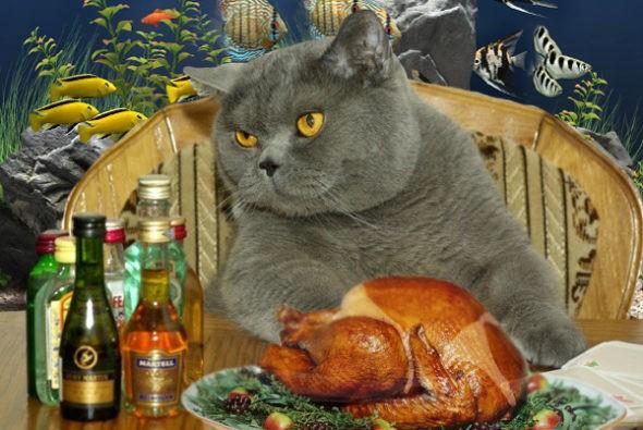 Чем можно и чем нельзя кормить кота