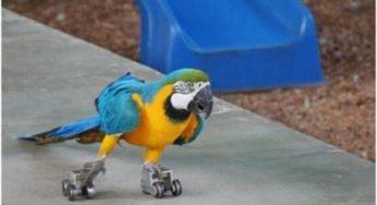 Самые сумасшедшие попугаи в одном видеоролике